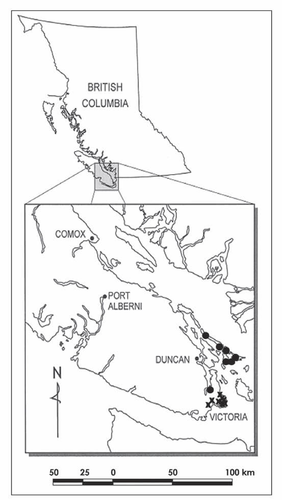 Map showing the Canadian distribution of Slender Popcornflower.