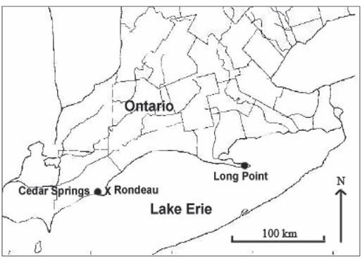 Map showing the Canadian distribution of Bent Spike-rush (Great Lakes Plains population) in Southern Ontario