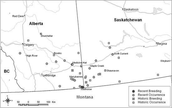 Figure 3 displays historic (1924-1999) and recent (2000-2010) Sage Thrasher sightings and confirmed breeding locations in Prairie Canada. The map is measured in kilometres.
