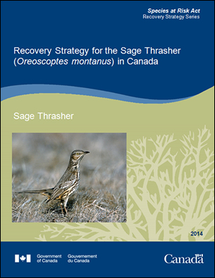 Cover page of the publication: Recovery Strategy for the Sage Thrasher (Oreoscoptes montanus) in Canada [Proposed] - 2014