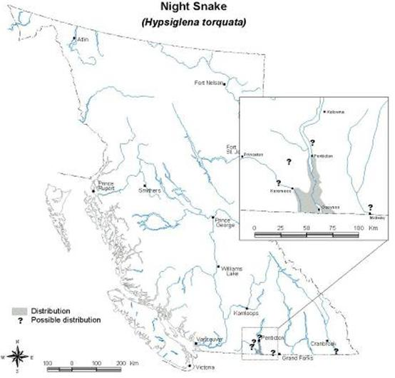Map of the distribution of the Desert Nightsnake in British Columbia.