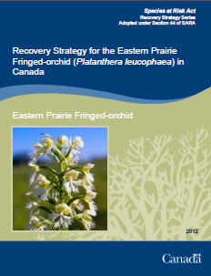 Cover of publication: Recovery Strategy for the Eastern Prairie Fringed-orchid (Platanthera leucophaea) in Canada – 2012