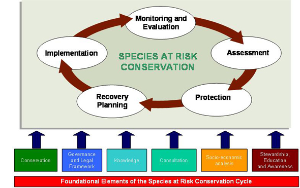 Species at Risk Conservation Cycle