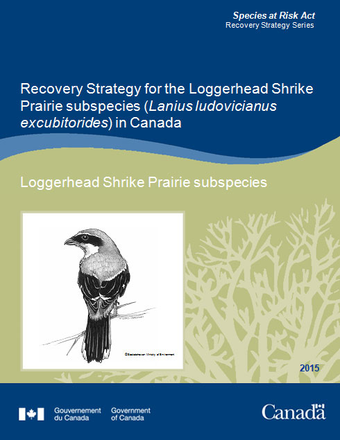 Recovery Strategy for Loggerhead Shrike
