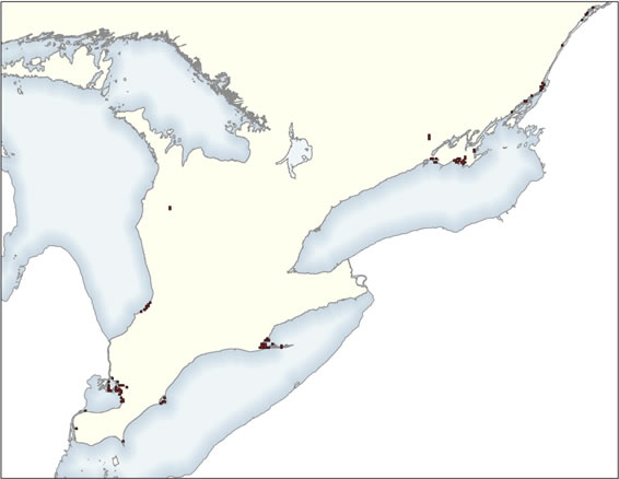 Map showing the location of the 2 by 2 kilometre grid cells used to estimate area of occupancy for the Pugnose Shiner in Canada (see long description below).