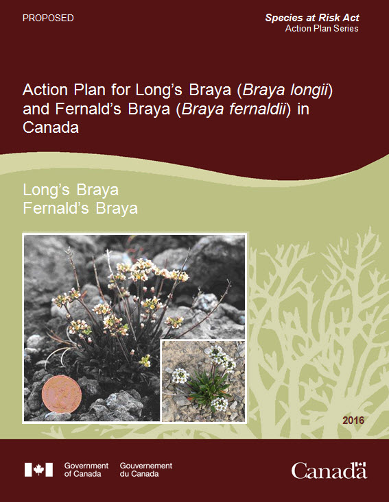 Action Plan for Long's Braya