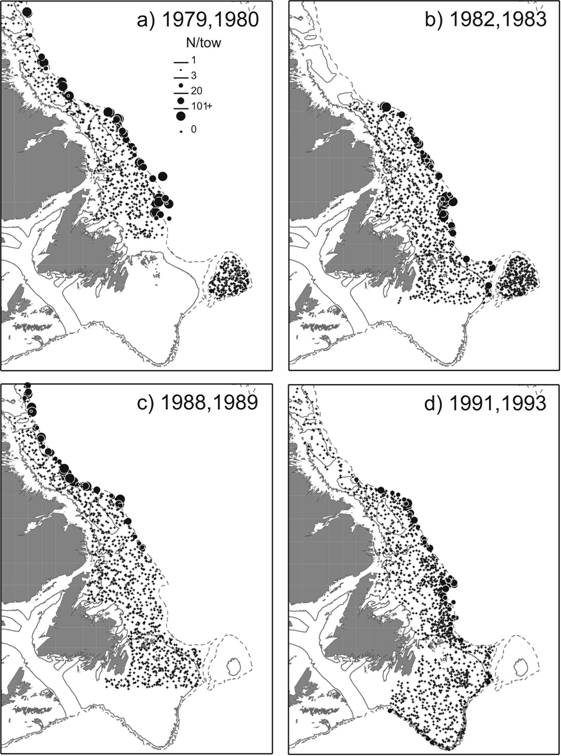 Four maps showing the geographic distribution of Roundnose Grenadier caught in fall surveys of the Labrador and Northeast Newfoundland shelves and the Grand Bank for selected years between 1978 and 1994.
