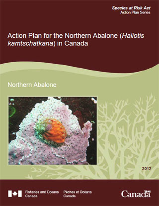 Species at Risk Act action plan series, Action plan for the Northern Abalone (Haliotis kamtschatkana) in Canada.