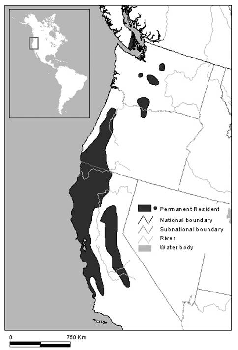 Showing the world distribution of Contia tenuis in North America.