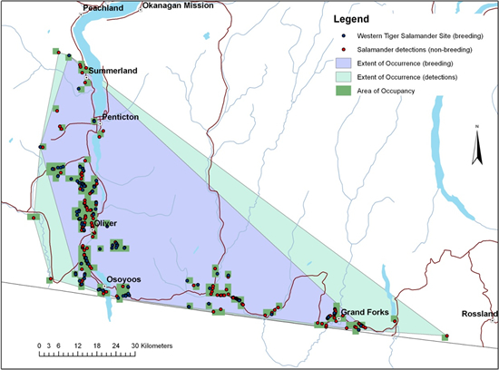 Map of the distribution of Western Tiger Salamander in British Columbia (see long description below).