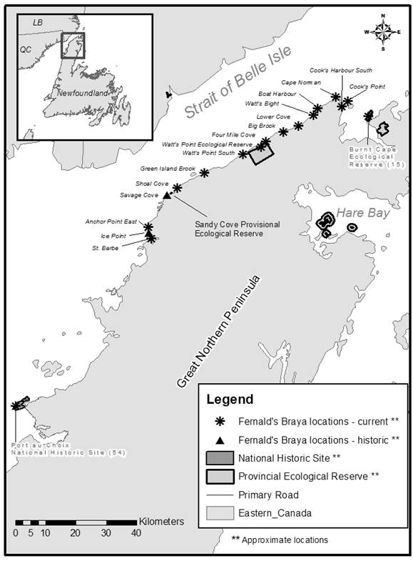 Figure 3 shows the historic and current distribution of Fernald's Braya on the Great Northern Peninsula of insular Newfoundland