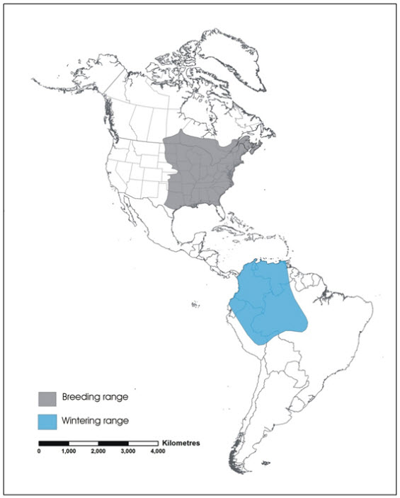 Map of the global range of the Eastern Wood-pewee (see long description below).