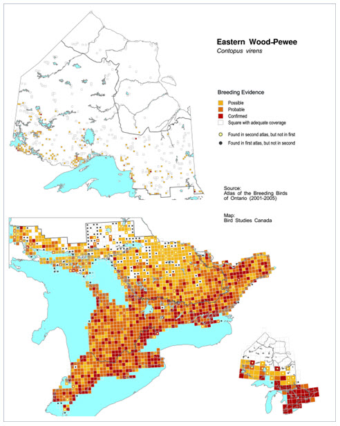 Three map images showing the Ontario distribution of the Eastern Wood-pewee during the period 2001 to 2005 (see long description below).