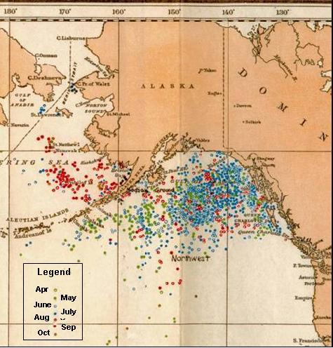 Map of historical right whale catches from 1785 – 1913 in the eastern North Pacific from logbook records of American whaleships. The discontinuous distribution across high latitudes has been used to support the hypothesis of discrete eastern and western populations in the North Pacific