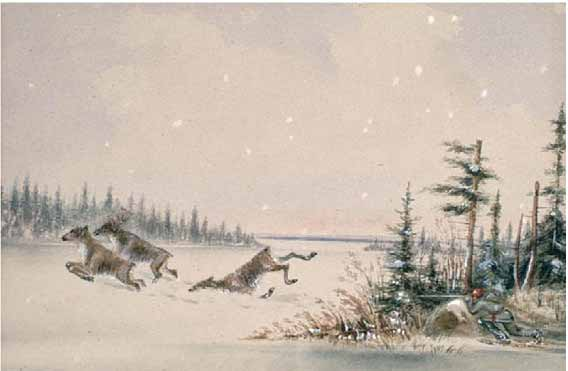 Painting of boreal caribou being hunted.