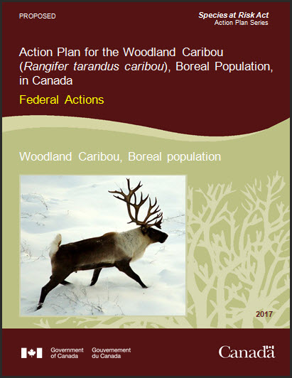 Action Plan for the Woodland Caribou