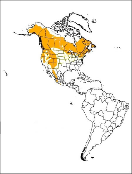 Map showing the breeding range of the Northern Goshawk (all subspecies) in the Western Hemisphere (see long description below).