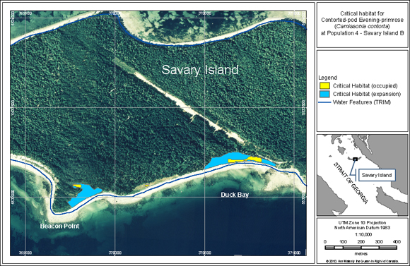 Location of critical habitat for Population 4 (Savary Island B) at Beacon Point, Death Camas Meadow and Duck Bay on Savary Island