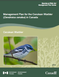 Publication cover of the Cerulean Warbler.