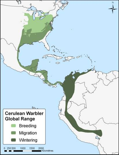 Figure 1 is a map of the global range of the Cerulean Warbler. Breeding, migration and wintering ranges are shown. The species breeds in the northeastern United States and parts of southeastern Canada. It migrates through the east of Central America and winters in the Andes Mountains of South America.