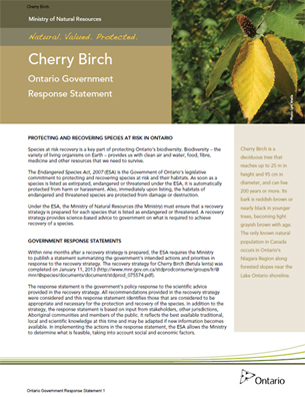Cover photo: Part 3  – Cherry Birch: Ontario Government Response Statement