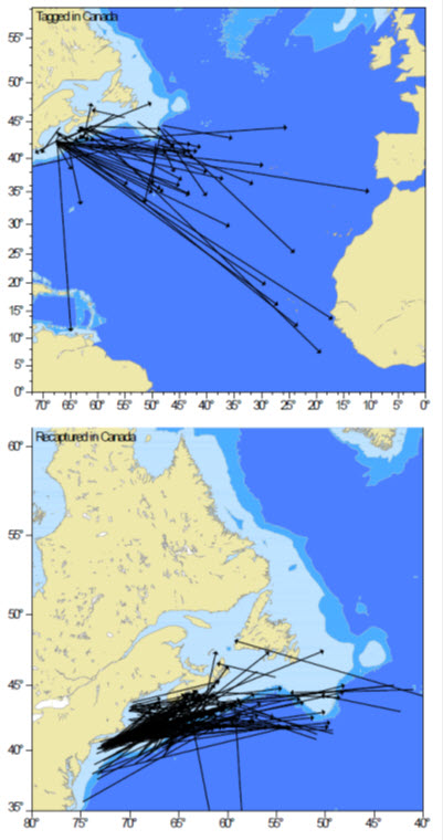 Two map panels showing localities where Blue Sharks were tagged (see long description below)