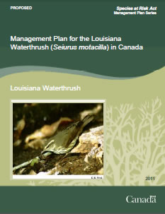 Cover of the publication: Management Plan for the Louisiana Waterthrush (Seiurus motacilla) in Canada [PROPOSED] – 2011.