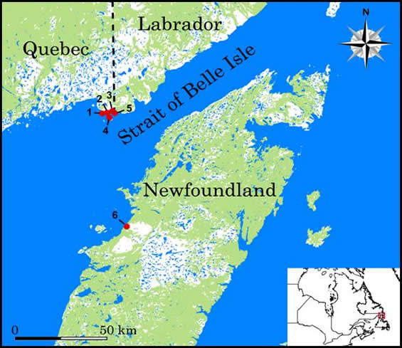 Figure 1 shows the known occurrences of the Fernald's Milk-vetch.  Five occurrences are clustered together near the Quebec / Labrador boarder along the Straight of Belle Isle.  There is one occurrence along the Straight of Belle Isle on the island of Newfoundland.
