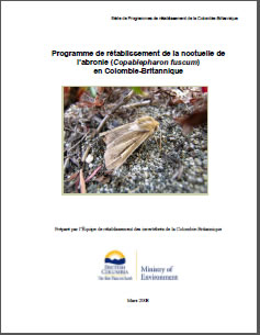 Cover of the publication: Part 2: Recovery Strategy for Sand-verbena Moth (Copablepharon fuscum) in British Columbia, prepared by the British Columbia Invertebrates Recovery Team.