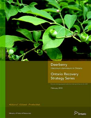 Ontario Recovery Strategy Series Recovery Strategy prepared under the Endangered Species Act, 2007 Deerberry (Vaccinium stamineum) in Ontario February 2010