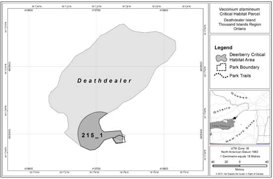 Figure 4: Deerberry critical habitat parcel #215_1 on Deathdealer Island in the Thousand Islands Region of Ontario. Critical habitat does not include existing infrastructure, as described in Section 1.2.