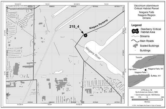 Figure 5: Deerberry critical habitat parcel #215_4 in the Niagara Region of Ontario. Critical habitat does not include existing infrastructure, as described in Section 1.2.