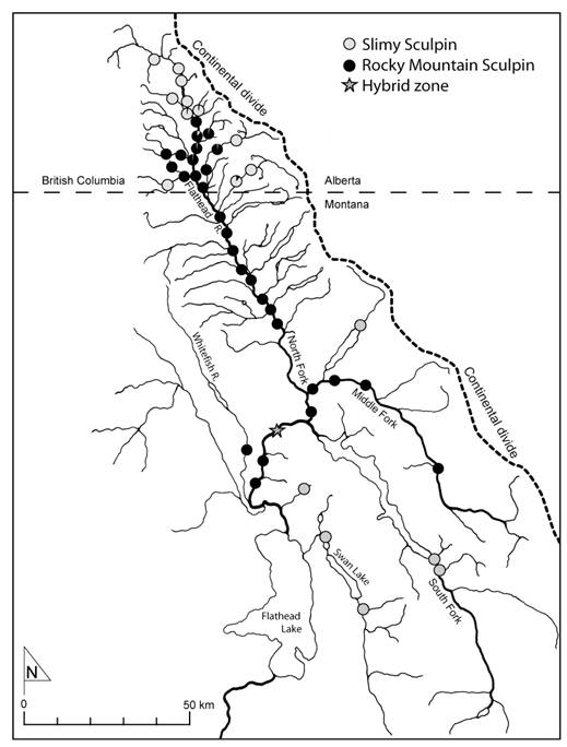 Map showing the distribution of the westslope designatable unit of the Rocky Mountain Sculpin in British Columbia and adjacent intermountain Montana. The distribution of the Slimy Sculpin is also shown.