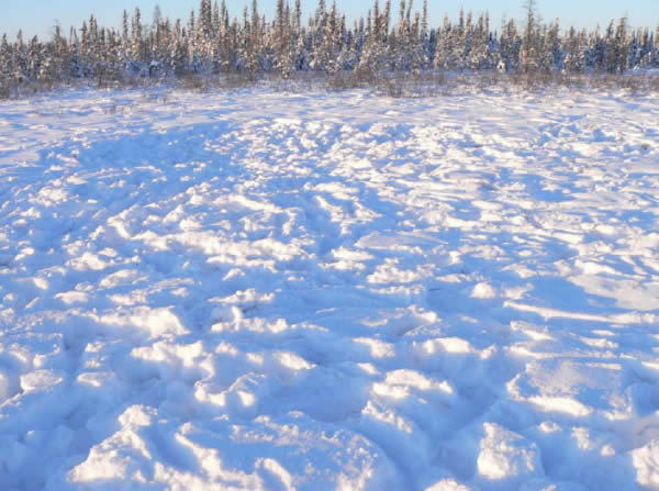 Photo of a Boreal caribou feeding area northeast of Caemron Hills. See long description below.
