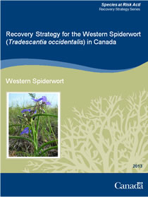 Cover page of the publication: Recovery Strategy for the Western Spiderwort (Tradescantia occidentalis) in Canada – 2013