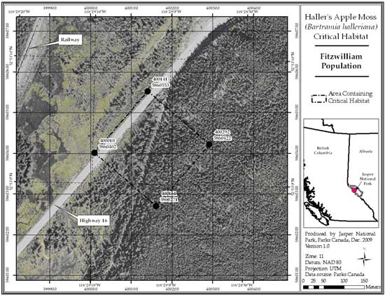 Figure 4: Location of critical habitat at Fitzwilliam Spur, Mount Robson Provincial Park, BC (parcel 689_3). Note that this imagery was taken prior to tree removal for pipeline construction. Trees southeast of Highway 16 to the cutline bisecting critical habitat have been removed. Refer to the text for a description of critical habitat, required habitat attributes and areas excluded from critical habitat.