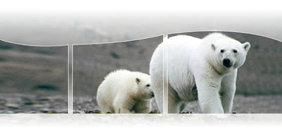 Photo of a mother polar bear and her cub.